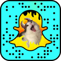 Cat Lady Does Something Amazing with Her Cats Using Snapchat